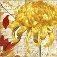 Chrysanthemes II Fine Art Print