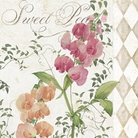 Sweet Pea by Color Bakery - various sizes