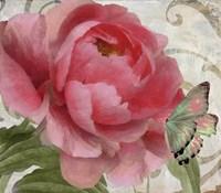 Apricot Peonies II Fine Art Print