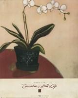 Cinnabar Still Life II Framed Print