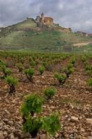 Vineyard in stony soil with San Vicente de la Sonsierra Village, La Rioja, Spain Fine Art Print