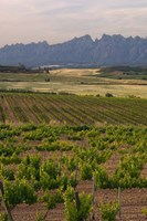 Spring Vineyards with Montserrat Mountain, Catalonia, Spain Fine Art Print