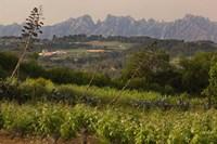 Vineyards and Cactus with Montserrat Mountain, Catalunya, Spain Fine Art Print