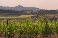 Spring Vineyards with Montserrat Mountain, Catalonia, Spain Fine Art Print