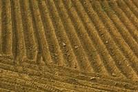 Tilled Ground Ready for Planting, Brinas, La Rioja, Spain Fine Art Print