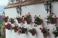 Geraniums along White Wall of Palacio de Mondragon, Ronda, Spain by John & Lisa Merrill - various sizes