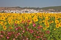 Spain, Andalusia, Bornos Sunflower Fields Fine Art Print