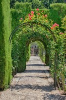 Archway of trees in the gardens of the Alhambra, Granada, Spain by Julie Eggers - various sizes