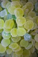 Spain Aragon Zaragoza Jellied Candy