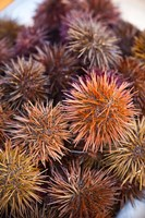 Sea Urchins For Sale, Cadiz, Spain by Walter Bibikow - various sizes
