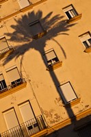 Spain, Cadiz, Campo del Sur, Palm Shadow by Walter Bibikow - various sizes