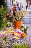 Spain, Cadiz, Plaza de Topete Flower Market by Walter Bibikow - various sizes