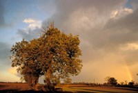 Trees after Rain and Rainbow, West Yorkshire, England by Walter Bibikow - various sizes