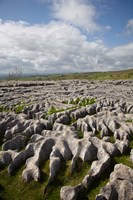 Limestone Pavement, Malham Cove, Yorkshire Dales National Park, North Yorkshire, England by David Wall - various sizes