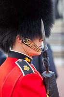 Scots Guard, Buckingham Palace, London, England Fine Art Print