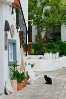 Street View with Black Cat, Manolates, Samos, Aegean Islands, Greece Fine Art Print