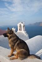 Greece, Santorini, Oia, Dog, Blue Domed Churches by Darrell Gulin - various sizes