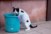 Greece, Crete, Chania, Old Harbor, Cat by Darrell Gulin - various sizes