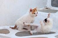 Kittens Playing, Mykonos, Greece by Darrell Gulin - various sizes
