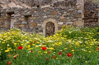 Old building and wildflowers, Island of Spinalonga, Crete, Greece Fine Art Print
