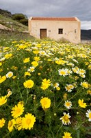 Wildflowers and church of St, Island of Spinalonga, Crete, Greece Fine Art Print