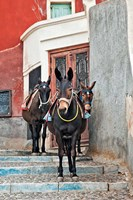 Mules, Imerovigli, Santorini, Greece Fine Art Print
