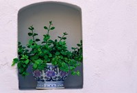 Alcove Plant, Santorini, Greece by Keren Su - various sizes