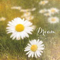 Daisy Dreams by Sue Schlabach - various sizes