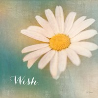 Daisy Wishes by Sue Schlabach - various sizes