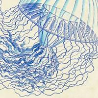 Vintage Jellyfish I Framed Print