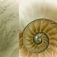 Kaleidoscope Of Memories II Fine Art Print