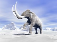 Large Mammoth Walking Slowly on the Snowy Mountain Framed Print
