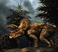 Triceratop, Herbivorous Dinosaur from the Cretaceous Period Fine Art Print
