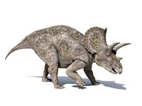 3D rendering of a Triceratops Dinosaur by Leonello Calvetti - various sizes