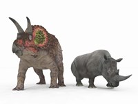 An adult Triceratops Compared to a modern adult White Rhinoceros Fine Art Print