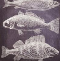 "Aquarium by Paula Scaletta - 12"" x 12"""