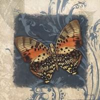 Swirl Butterfly III Framed Print