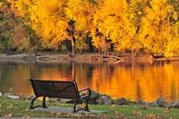 Fall Glow Fine Art Print