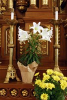 Easter Altar Framed Print