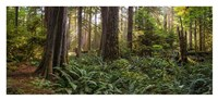 Cathedral Forest Fine Art Print