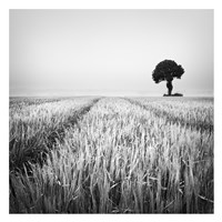 The Wheat Field Fine Art Print