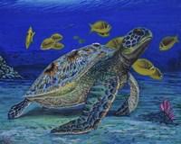 Turtle Tale Fine Art Print
