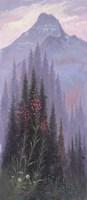 Fireweed Framed Print
