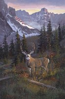 High Country Muley Fine Art Print
