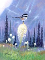 Chickadee by Allen Jimmerson - various sizes