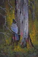 Stellars Jay by Allen Jimmerson - various sizes