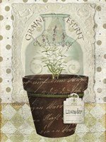 Herb Pot Lavender by Beth Albert - various sizes - $19.49