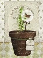 Herb Pots Rosemary Fine Art Print