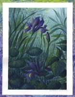 Water Iris Fine Art Print