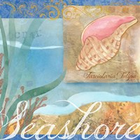 Seashells I by Fiona Stokes-Gilbert - various sizes